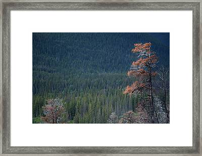 Montana Tree Line Framed Print