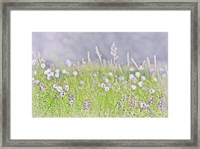Framed Print featuring the photograph Montana Wildflowers Lavender by Jennie Marie Schell