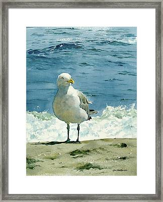 Montauk Gull Framed Print by Tom Hedderich