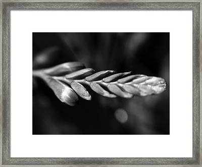 Framed Print featuring the photograph Montbretia  by Keith Elliott