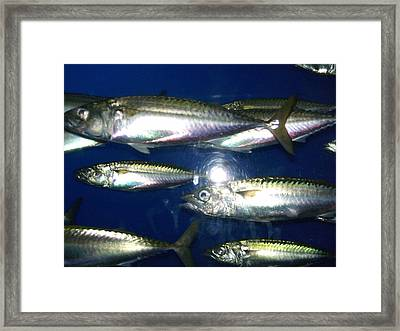 Monterey Bay Aquarium.  Framed Print by Anne Zimmerman