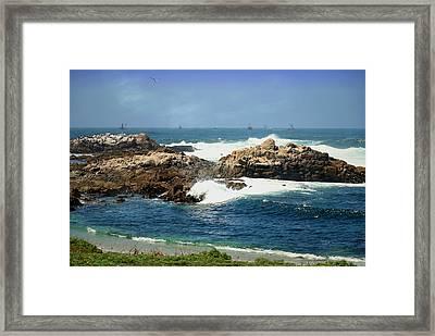 Monterey Bay Fishing Fleet Framed Print