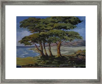 Monterey Bay Trees Framed Print by Barbara Moore