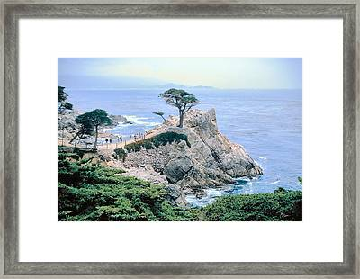 Monterey Cyprus  California Seacoast Seascape Picture Decor Framed Print