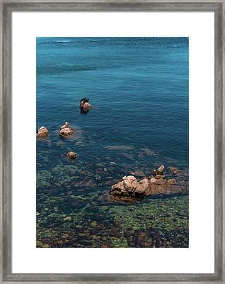 Monterey Framed Print by Martina Thompson
