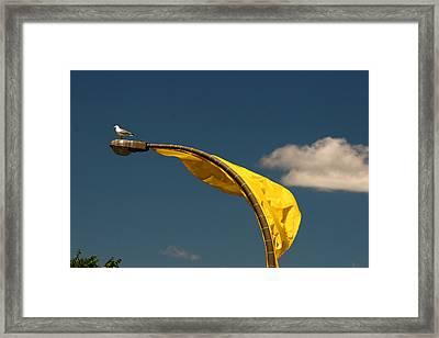 Montreal Gull Framed Print by Art Ferrier