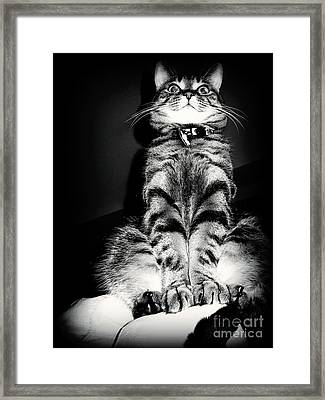 Monty Our Precious Cat Framed Print by Jolanta Anna Karolska