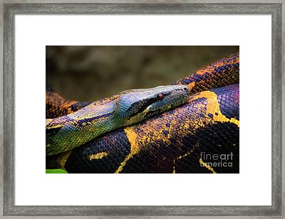 Don't Wear This Boa Framed Print