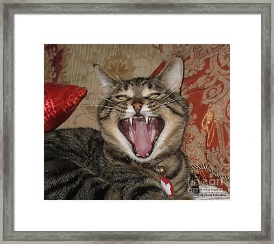 Monty's Yawn Framed Print by Jolanta Anna Karolska