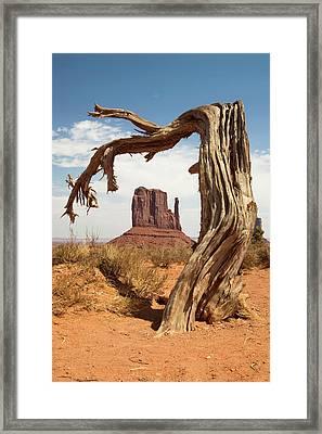 Monument Valley Desert Tree Framed Print