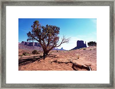 Monument Valley Tree 1 Framed Print by Kim Lessel