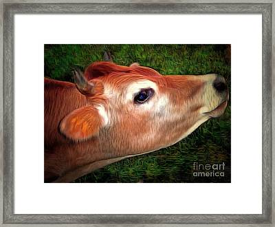 Moo - Jersey Cow Framed Print