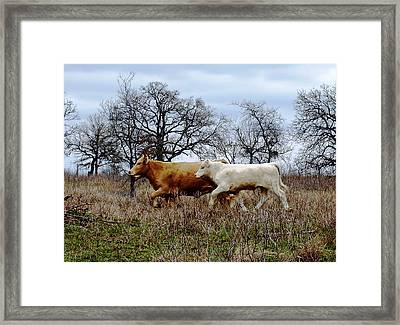 Moo On The Run Framed Print by James Granberry