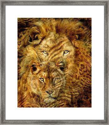 Moods Of Africa - Lions 2 Framed Print by Carol Cavalaris