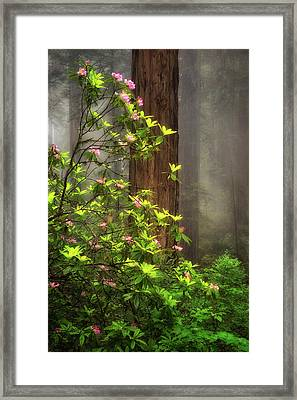 Moody Forest  Framed Print