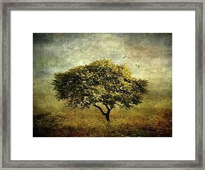 Moody Mimosa Framed Print