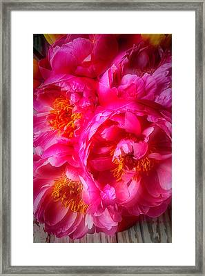 Moody Peony's Framed Print by Garry Gay