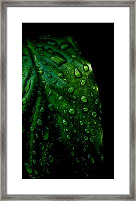 Moody Raindrops Framed Print by Parker Cunningham