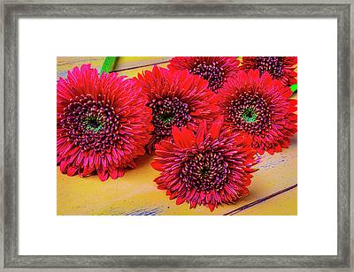 Moody Red Gerbera Dasies Framed Print by Garry Gay