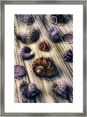 Moody Sea Shells  Framed Print by Garry Gay