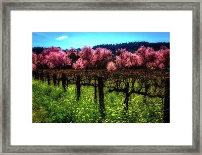 Moody Spring Vineyards Framed Print by Garry Gay