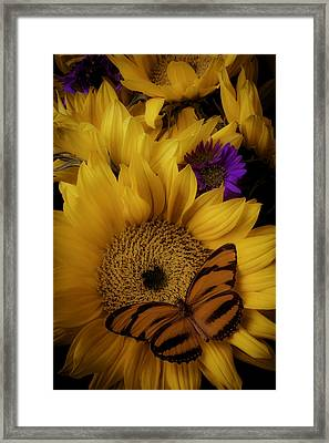Moody Sunflower Framed Print by Garry Gay