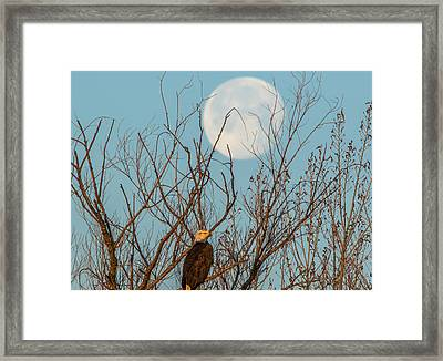 Moon And Eagle Framed Print by Marc Crumpler