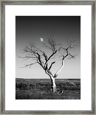 Moon And Memory At Bosque Del Apache N M Framed Print by Mary Lee Dereske