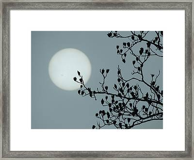 Moon And Poplar Silhouette Framed Print by Jamie K Reaser