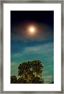 Moon And Tree Framed Print by Dennis Wagner
