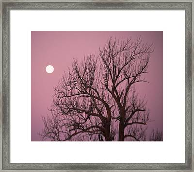 Moon And Tree Framed Print