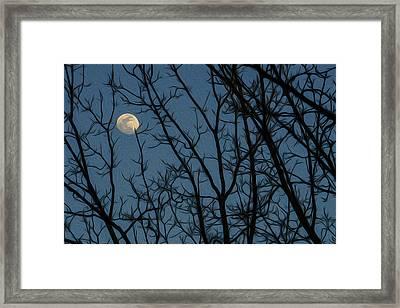 Moon At Dusk Through Trees - Impressionism Framed Print
