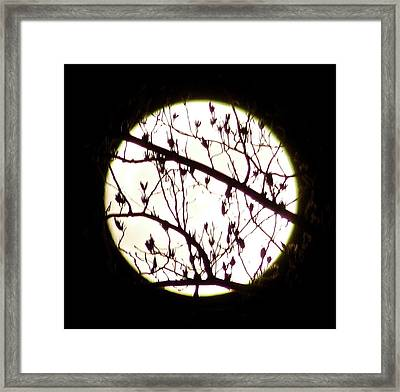 Moon Branches Framed Print