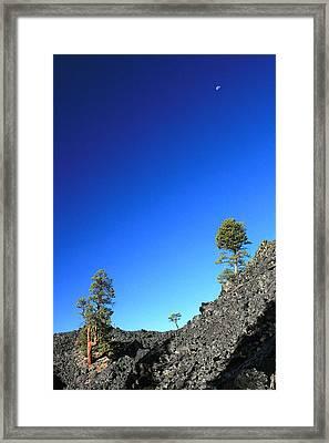 Moon Cedars And Moon Framed Print