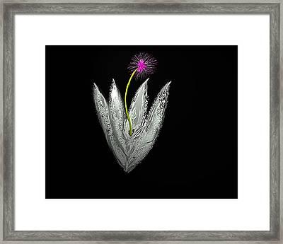 Moon Flower Framed Print by John Mueller