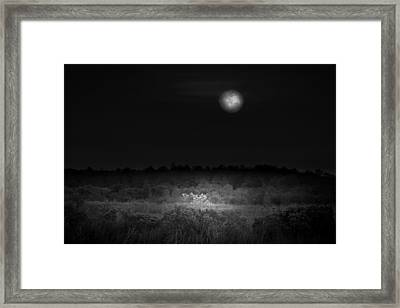 Moon Glow Framed Print by Mark Andrew Thomas