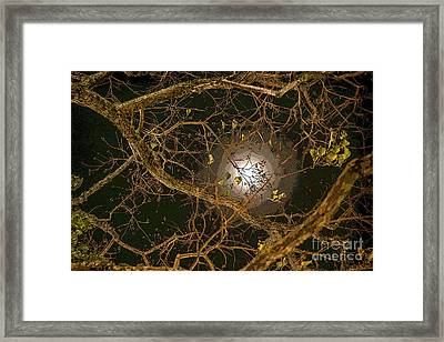 Moon In The Tree Framed Print