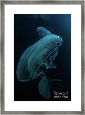 Moon Jelly Framed Print by Sarah Brigham