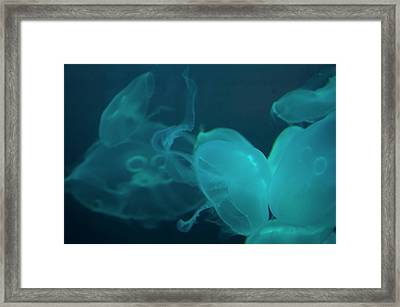 Framed Print featuring the photograph Moon Jellyfish 3 by Chris Flees