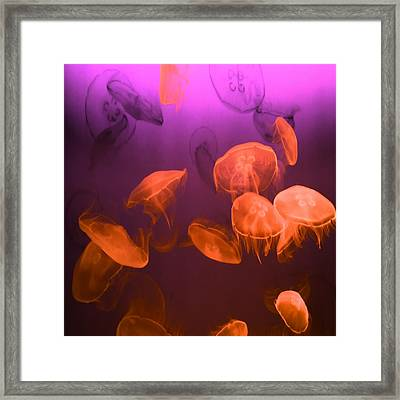 Moon Jellyfish - Red And Purple Framed Print by Marianna Mills