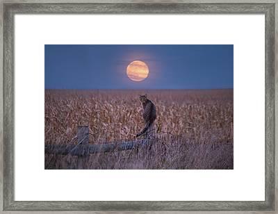 Moon Kitty  Framed Print
