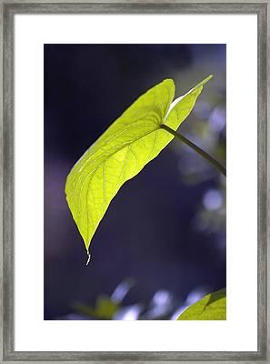 Moon Leaf Framed Print by Ross Powell