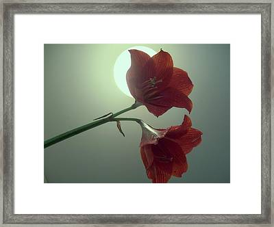moon Lilli eclipse Framed Print by Nereida Slesarchik Cedeno Wilcoxon