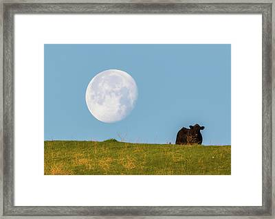 Moon Over Moo 2 Framed Print by Marc Crumpler