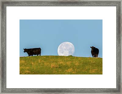 Moon Over Moo Framed Print by Marc Crumpler