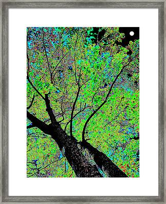 Moon Over The Maples Framed Print by Will Borden