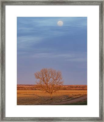 Moon Over Tree Framed Print