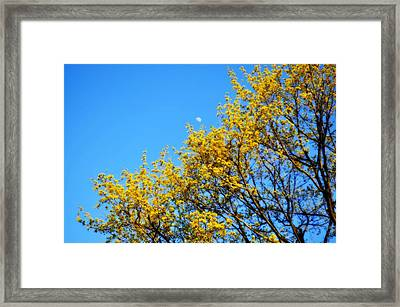Moon Shine Framed Print by Brynn Ditsche