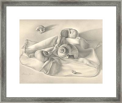 Framed Print featuring the drawing Moon Snail Still Life by Donna Basile
