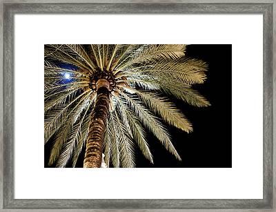 Moon Through Palm Tree Framed Print